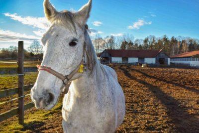 Вентиляция животноводческих ферм и помещений